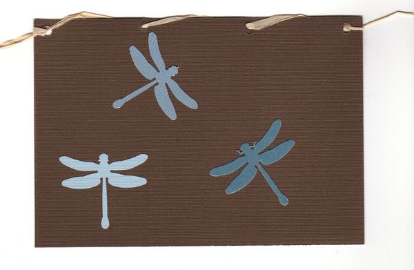 031 - Dragonflies