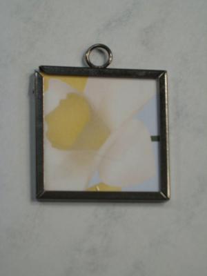 030 A - Daffodil closeup
