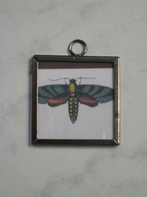043 A - Moth
